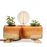 Natural Cactus Table Lamp